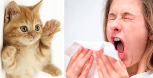 аллергия на запахи симптомы